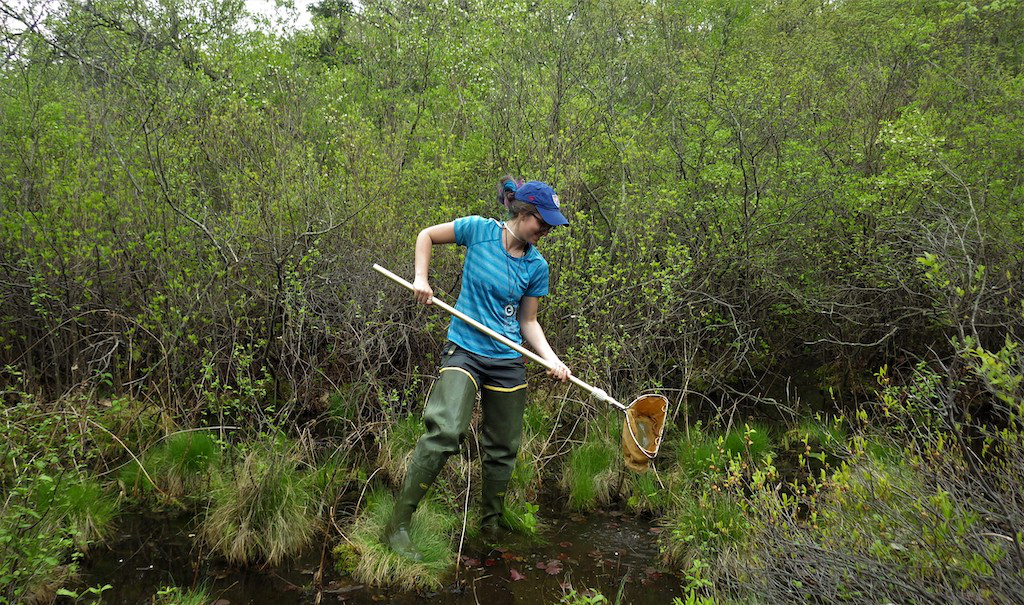 student catching critters in wetland