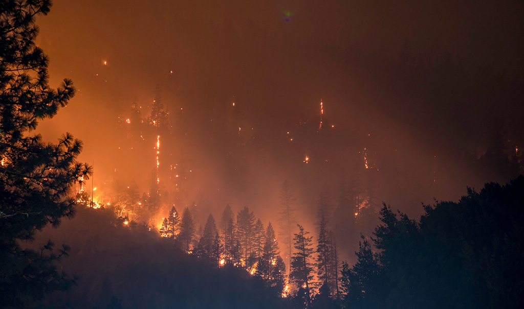 Night image of burning forest fire
