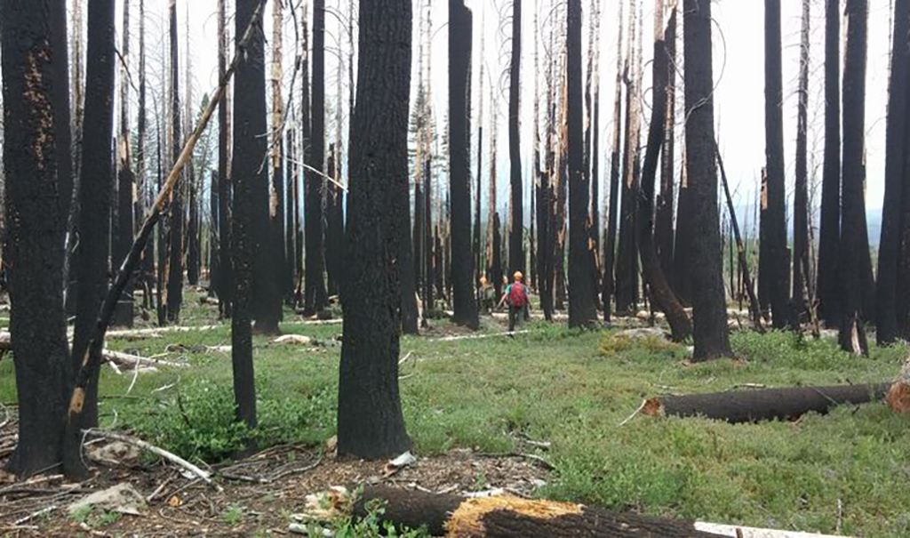 Outdoor photo of forest after a fire