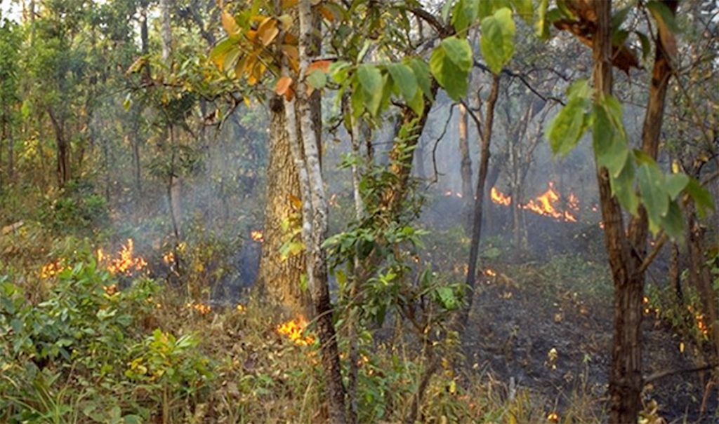 Image of fire burning in Amazon rainforest